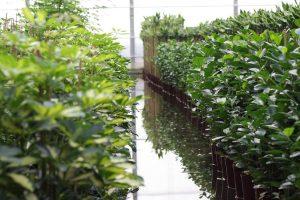 Hydrokulturen im Anzuchtbeet