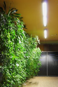 Wachstumsfaktor Licht für vitale Pflanzen