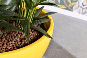 Blähton im bepflanzten Gefäß