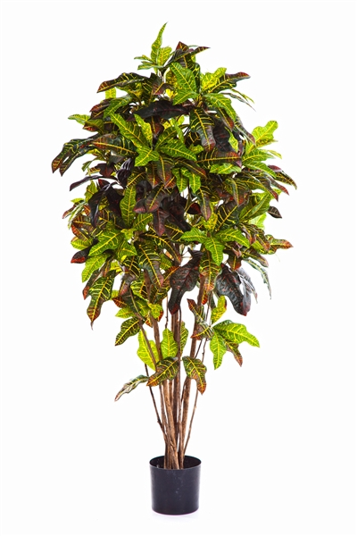 Croton Tree Textilpflanze