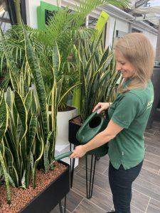 Frau gießt Pflanze mit einer Nährstofflösung