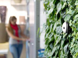 Der Wi-Fi Plant Sensor an Vertikalbegrünung