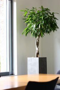 große Pflanze in eckigem Gefäß