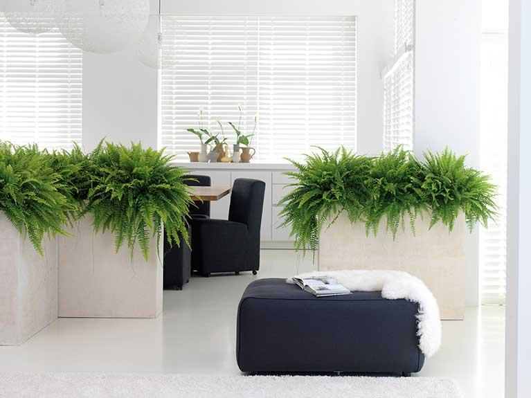 Zimmerpflanzen Als Naturliche Luftbefeuchter