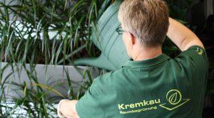 Pflanzenpflege vom Experten - Kremkau Raumbegrünung