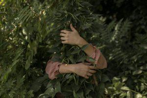 Arme legen sich um einen Pflanzenstrauch