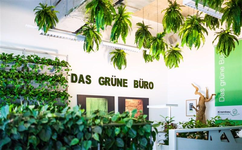 Das grüne Büro – Kremkau Raumbegrünung