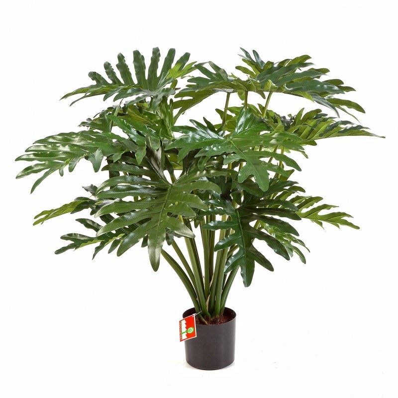 Philodendron Bush 90