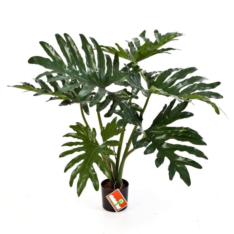 Philodendron Bush