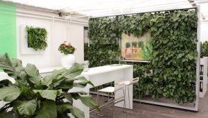 Pflanzenwand und Pflanzenbild