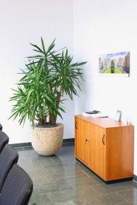 Yucca Palme im Holzscheibengefäß