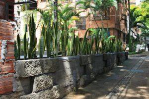 Sansevieria Pflanze als Grundstückseinfassung an sonnigem Standort