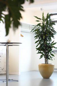 Zeitloses Couple Keramikpflanzgefäß mit Drachenbaum für schattige Standorte
