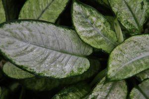 Verfärbungen an Grünpflanzen