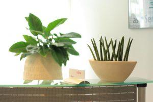 Sidboardgefäß mit Sansevieria und Welcome Gefäß mit Philodendron