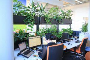 Üppige Raumbegrünung in einem Büro um Raumluft zu filtern