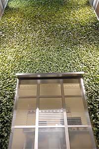 Die Pflanzenwand im Sendehaus von FFN