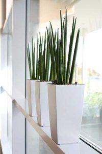 Beispielbild Zimmerpflanze